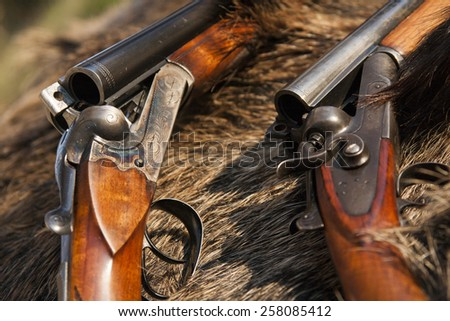two hunting gun on the skin of wild boar - stock photo