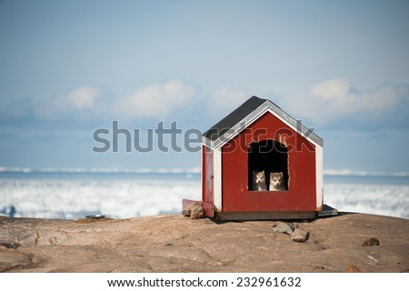 Two Husky puppies in small house - stock photo