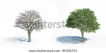 Two isolated trees with and without leafs - stock photo