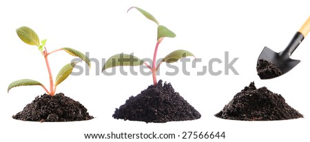 two just planted plants and preparation of soil to landing of the following - stock photo