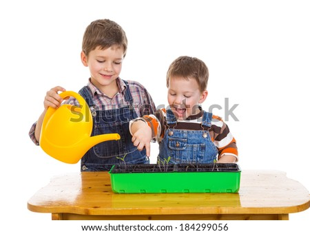 Two kids watering a seedling on the desk, isolated on white - stock photo
