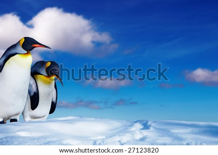 Two king penguins in the snow - stock photo