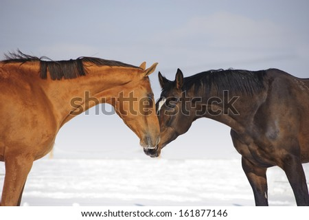 two kissing horses - stock photo