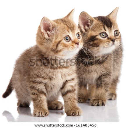 Two kitten  on a white background - stock photo
