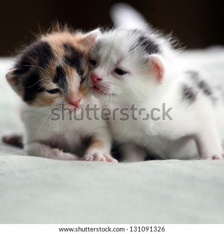Two kittens. - stock photo