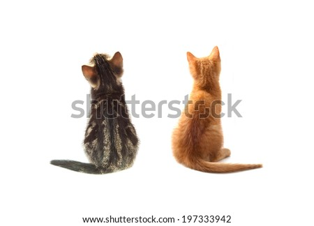 Two kittens from behind, isolated on white