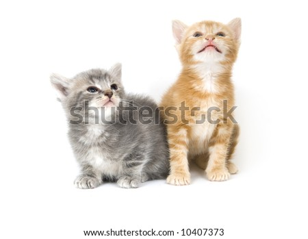 Two kittens interact on a white background