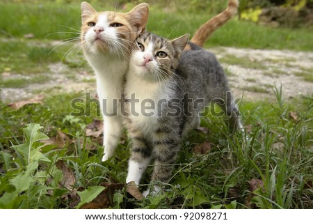Two kittens leaning on each other together as friends - stock photo