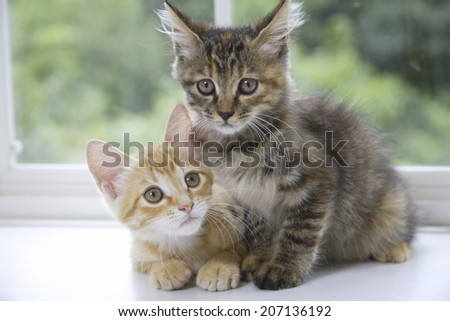 Two Kittens Lined Up By The Window