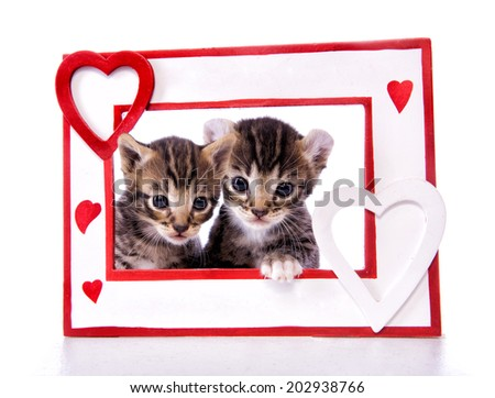 Two kittens looking through frame with heart shapes isolated on white background - stock photo