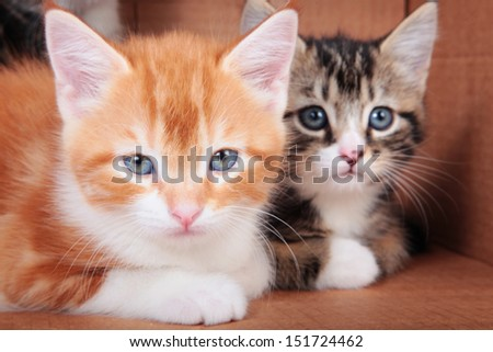 Two kittens on a cardboard background - stock photo