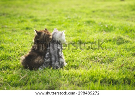 Two kittens sitting and looking sunset on green grass