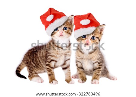two kittens with Christmas hats isolated on white background - stock photo