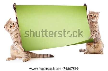 Two kittens with placard or banner for your text - stock photo
