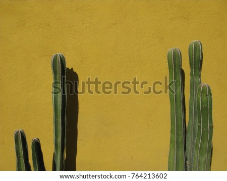 Two Large Tall Dark Green Cactus Stock Photo (Safe to Use) 764213602 ...