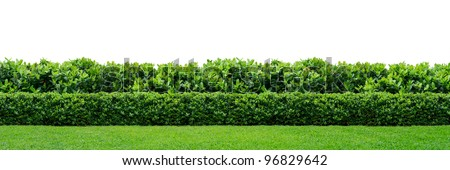 Two layers of green hedge on white background - stock photo