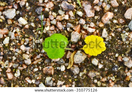 Two leaf symbolizing the end of summer and beginning of autumn. they are part of a single plant. As with humans, one part of the world. - stock photo