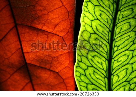 Two leaves - stock photo