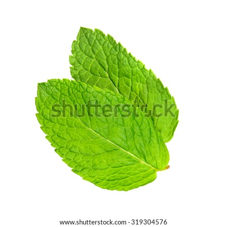 two leaves of mint isolated on white background
