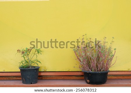 Two life and yellow wall - stock photo