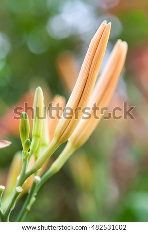 Two lily buds with closed petals on colorful background, selective focus