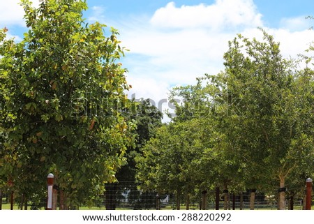 Two lines of different species trees at a wholesale plant nursery.  - stock photo