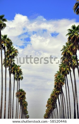 Two lines of palm trees making a v shape against cloudy blue sky.