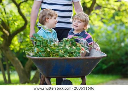 Two little boys having fun in a wheelbarrow pushing by father in summer garden - stock photo