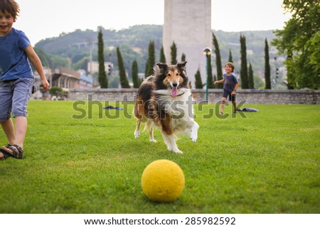 Two little boys playing with a collie dog with the ball in the park - stock photo