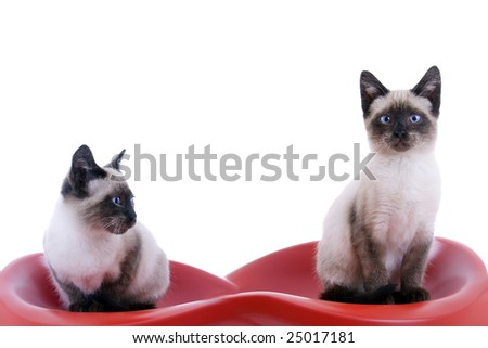 Two little cat on white background