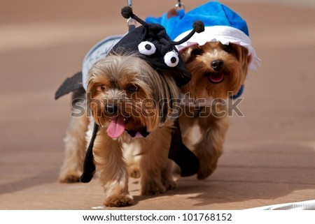 Two little dogs - stock photo