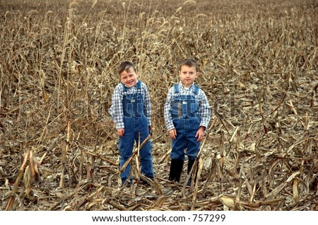 Two little farm boys in harvested cornfield.  One boy munching on wheat. - stock photo