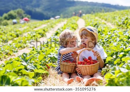 Two little friends, kid boys having fun on strawberry farm in summer. Children eating healthy organic food, fresh berries. Happy twins. - stock photo