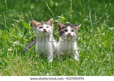 Two little kittens in the green grass - stock photo