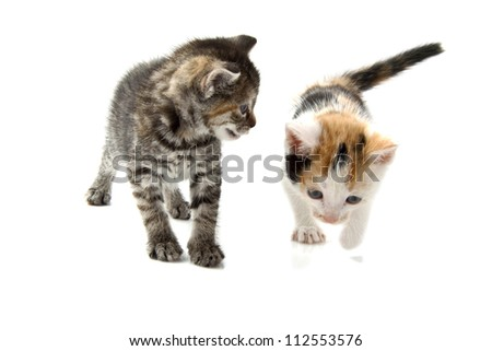 Two little kittens isolated on a white background - stock photo