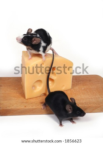 two little mice and cheese - stock photo