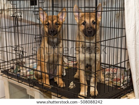 Two little puppy dogs in a cage of a shelter