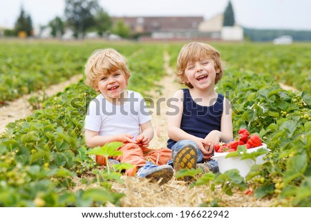 Two little sibling boys having fun on strawberry farm in summer - stock photo