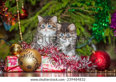 Two little tabby kittens sitting near a christmas tree - stock photo