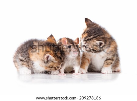 Two little tabby kittens with a rat - stock photo