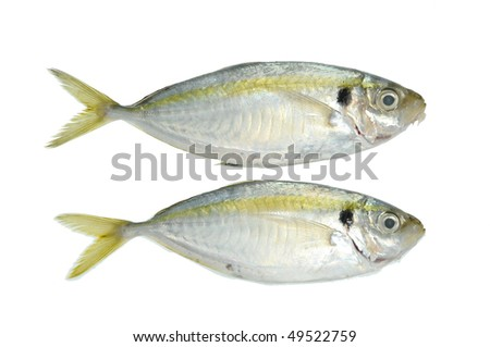 Two Live Fish In Isolation