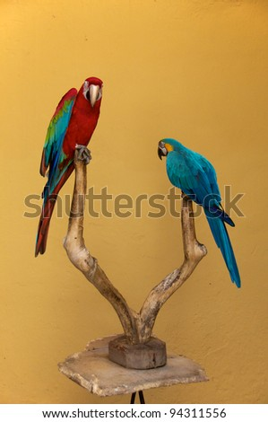 Two lovely parrots on a branch.  Ararauna end red and green macaw in Brazil - stock photo