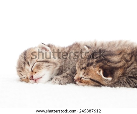 Two lovely tabby kitten sleeping on a white background