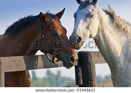 Two loving horses at horse  farm split by fence - stock photo