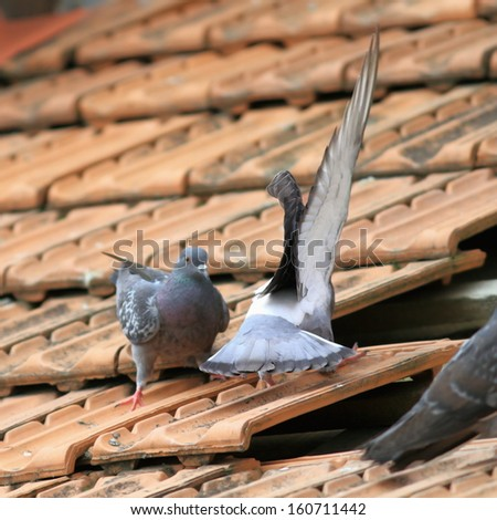two male pigeons fighting on top of damaged roof