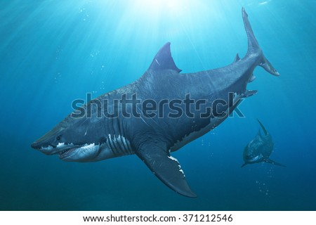Two Megalodon sharks on the prowl. - stock photo