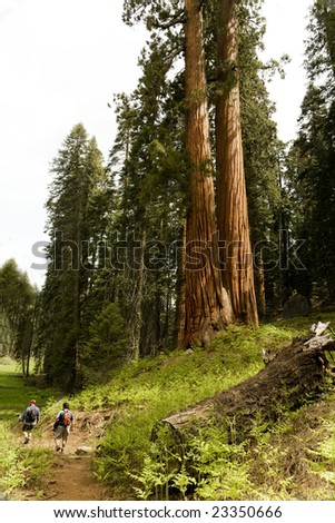 Two Men Hiking Through Sequoia National Park - stock photo