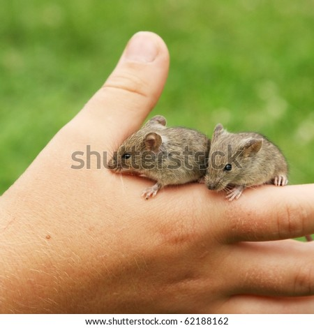 Two mice in hand on green grass background - stock photo