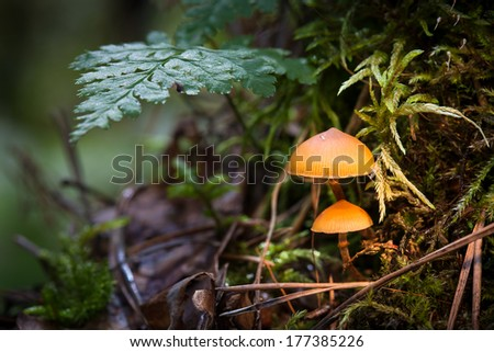 Two mushrooms, toadstools on the moss under the ferns. - stock photo