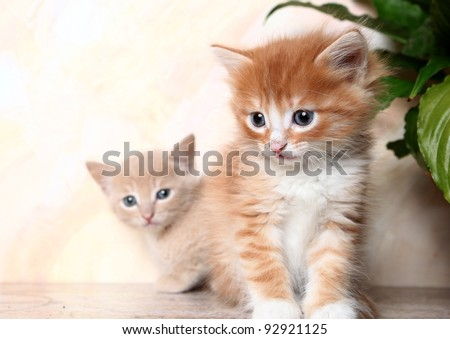 two nice kittens sit together